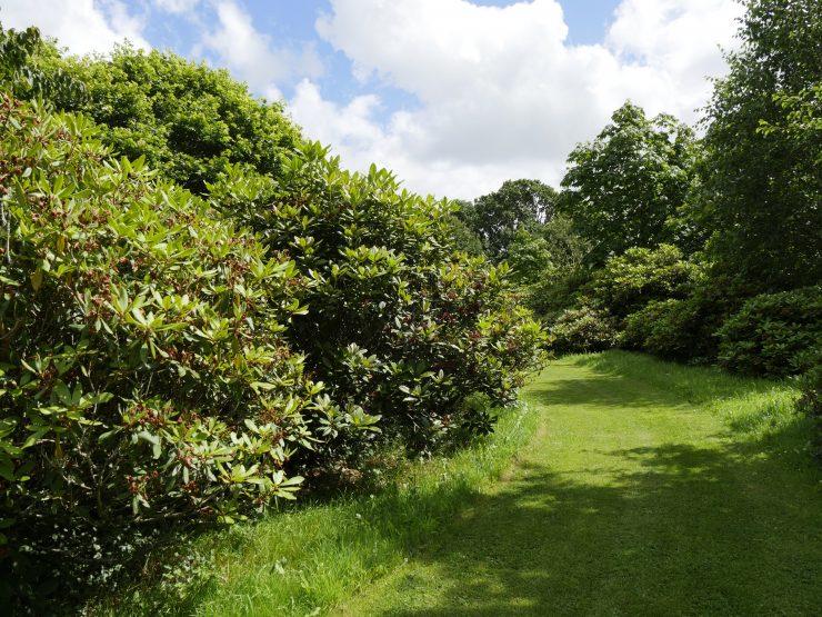 Les arbres du monde à Huelgoat, Bretagne
