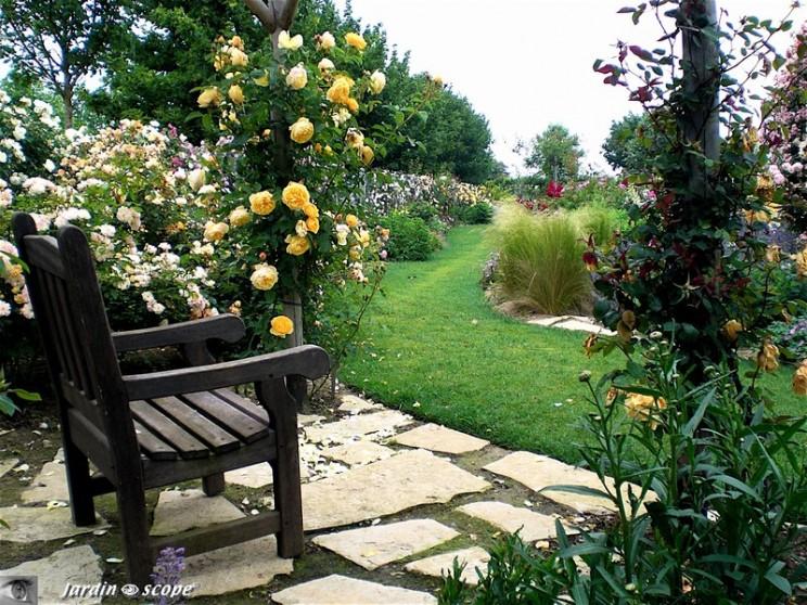 Roses anciennes ©P. Laforêt