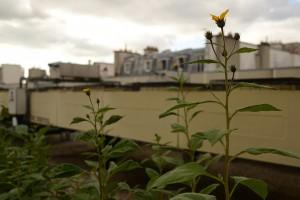 Jardins sur les toits