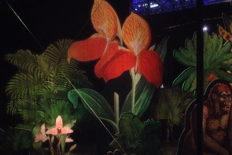 Decor-Floral-Darwin