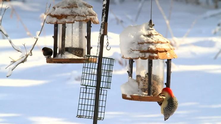 Oiseaux mangeoires pour l'hiver