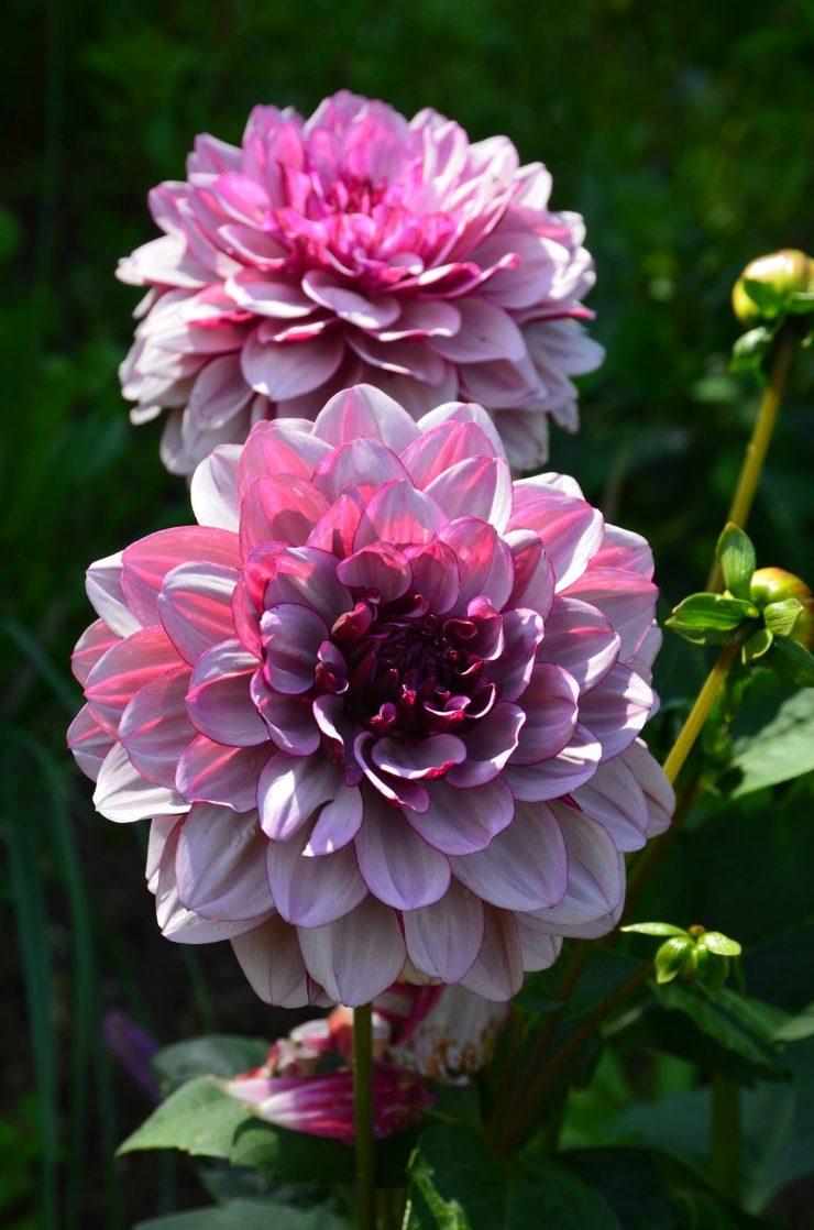 Le jardin Sophie Arendt