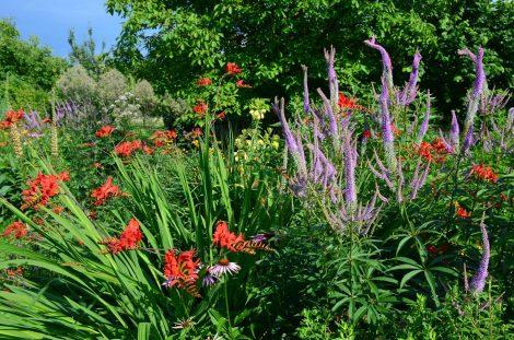 Le jardin de Sophie Arendt