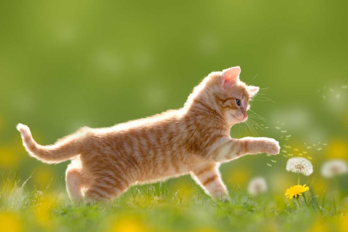 chaton au jardin
