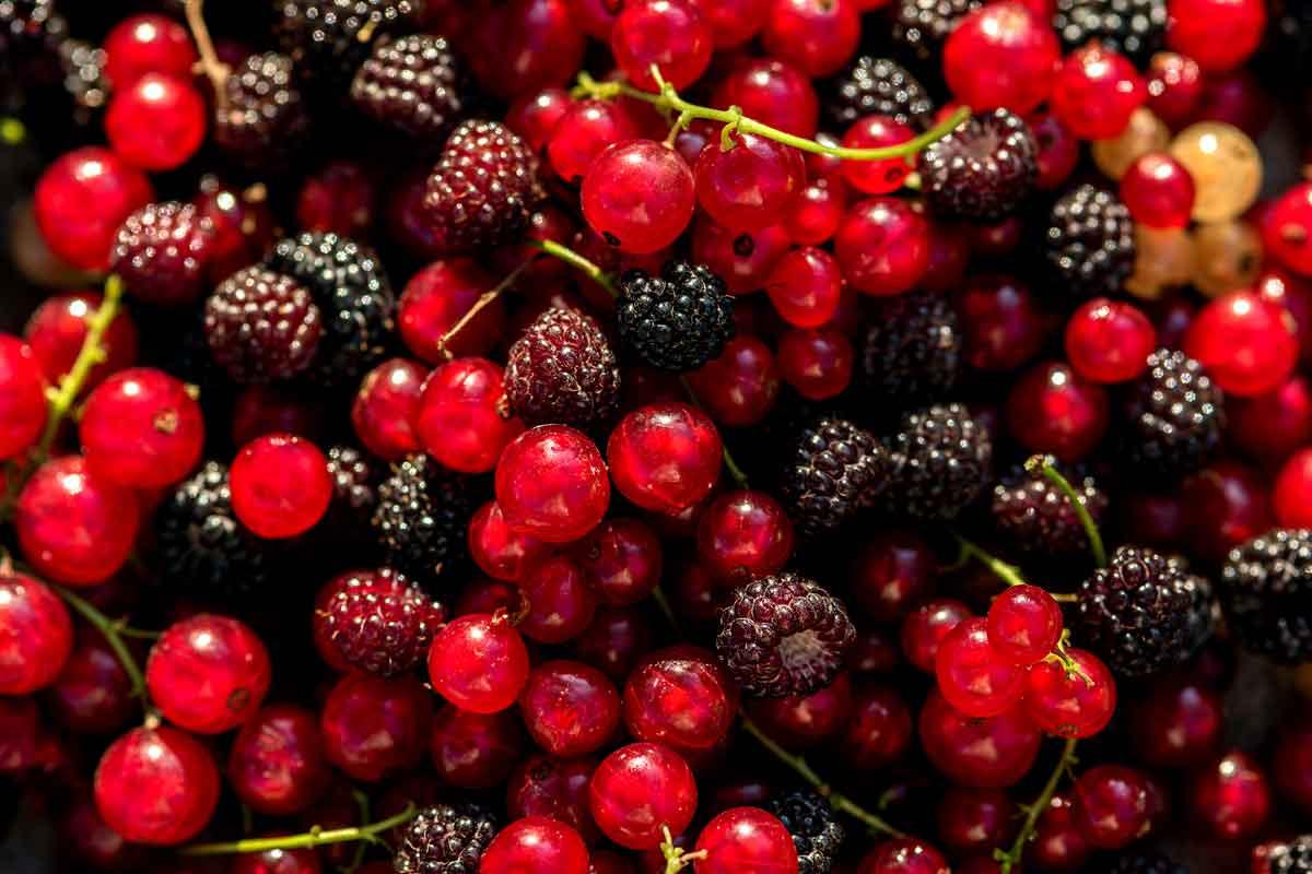Récolter des fruits rouges sur son balcon