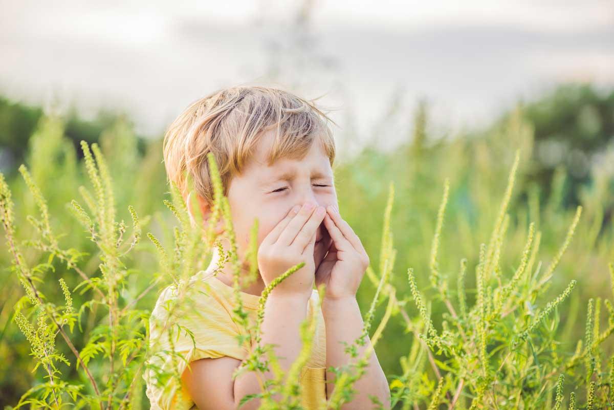 l'ambroisie : allergie