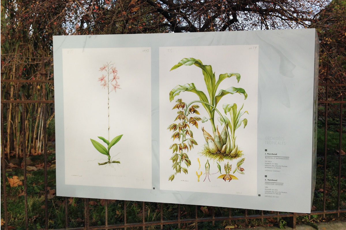 L\'orchidée s\'expose au Jardin des plantes de Paris   Hortus Focus I mag