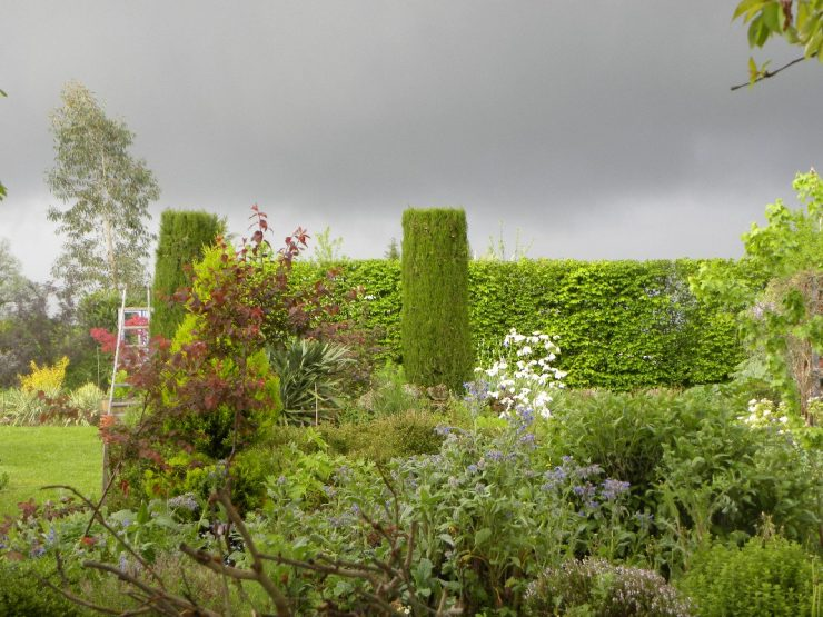 nathalie-beaucoujareix-cypres-haie-jardin