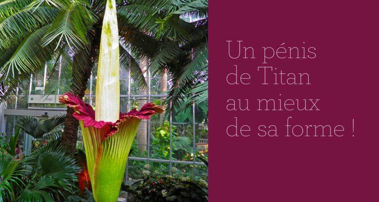Pénis de Titan à Nancy