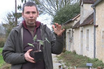 Vivace : Fabrice Gautier, Sous un arbre perché