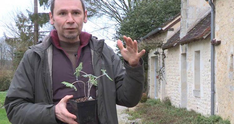 Fabrice Gautier, Sous un arbre perché