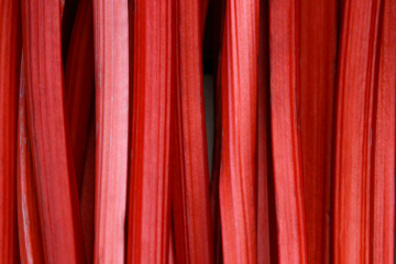 Rhubarbe rouge
