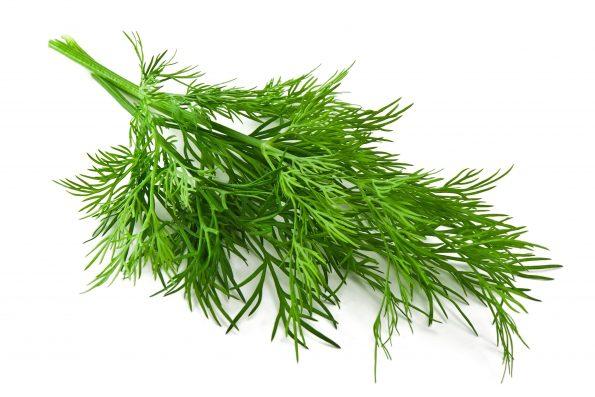 plante aromatique : aneth - Hortus Focus