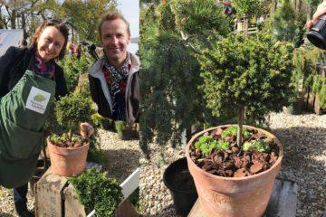 Marier conifères et succulentes