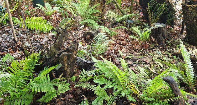 stumpery - hortus focus