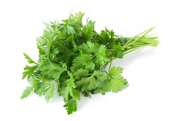 plante aromatique : persil - Hortus Focus
