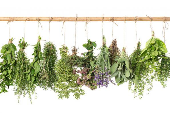 plante aromatiques