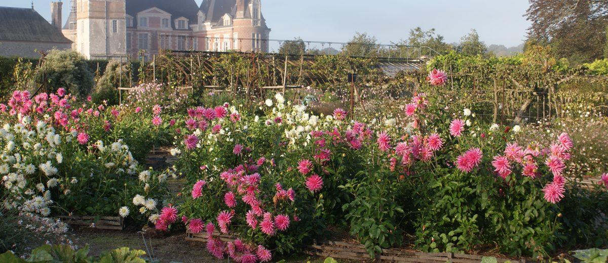 Potirons et dahlias au Chateau de la Bussière
