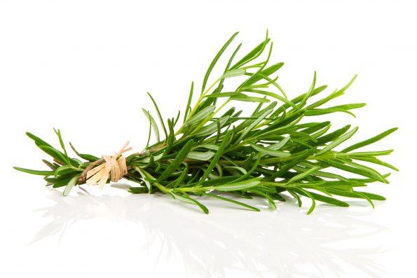 plante aromatique : romarin - Hortus Focus