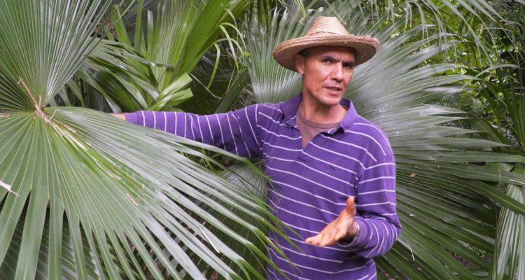 Patrick Fontaine - Jardin parfums et épices - La Réunion