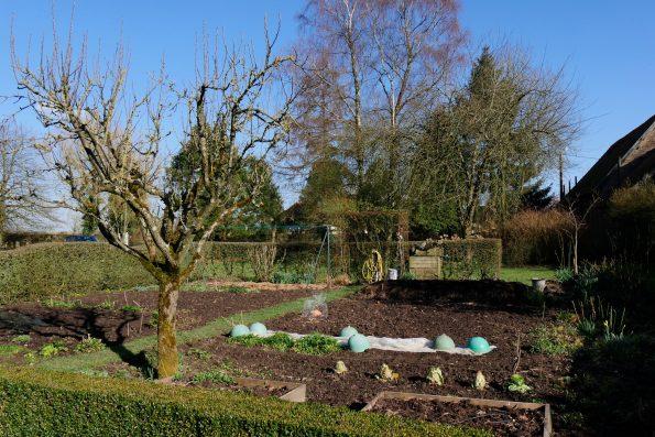 jardin de Marie-Ange : potager