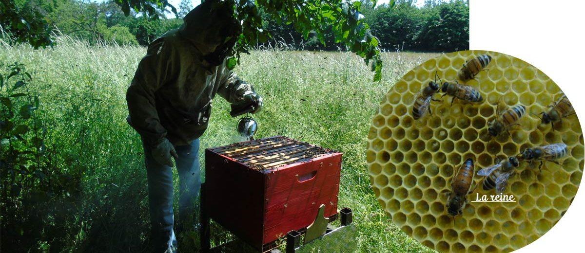enfumage des ruches