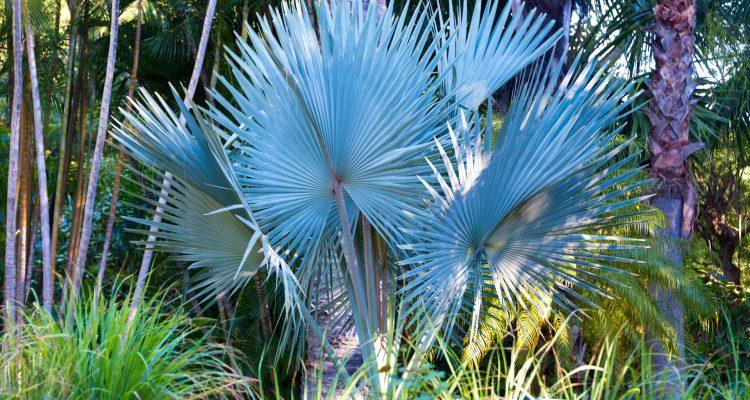A La Reunion Dans Le Jardin D Eden Hortus Focus I Mag