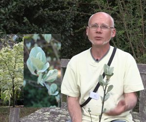 Pascal Lecerf - Jardin en marche et sorbiers