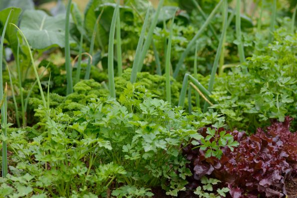 Permaculture : potager
