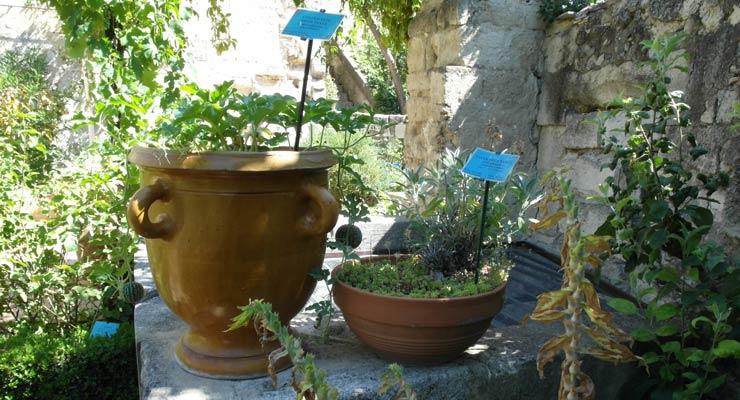 jardin1-pots