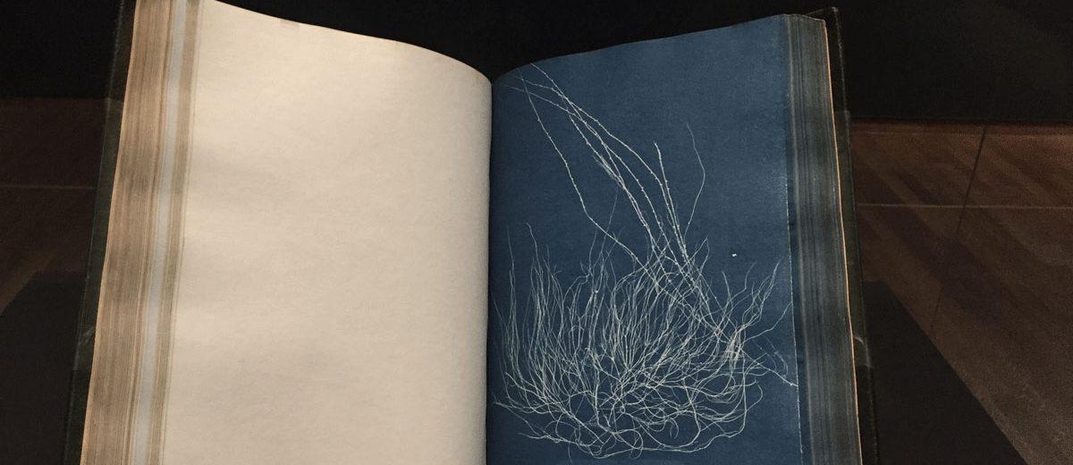 herbier bleu d'Anna Atkins