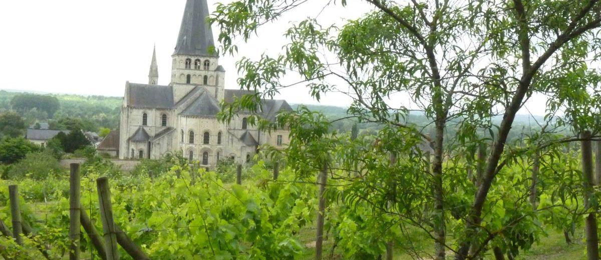 Vignes - Abbaye de Saint-Georges
