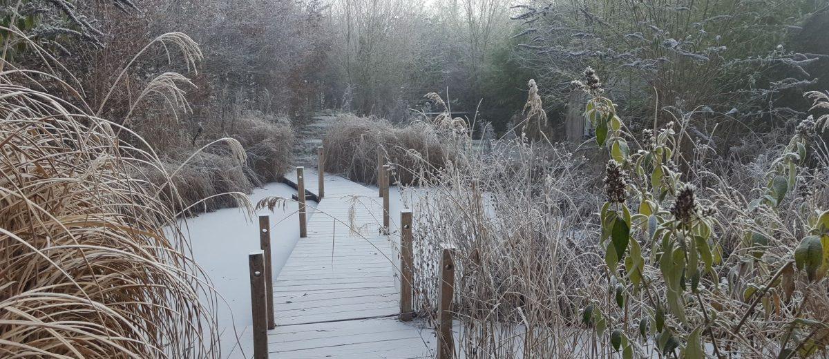 Le bassin aux poissons en hiver