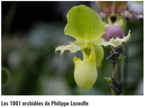 Journée mondiale de l'orchidée