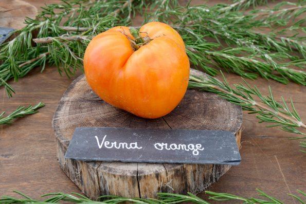 tomate Verna Orange