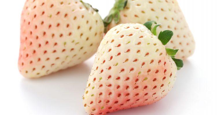 fraise blanche