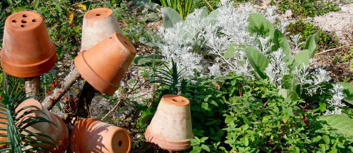 armoise : jardin sec