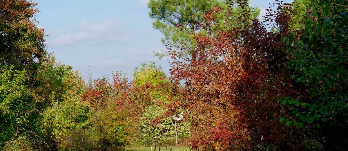 scene automne