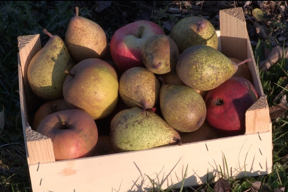 poires - pommes