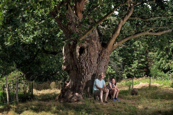 Arbres : chêne pédonculé