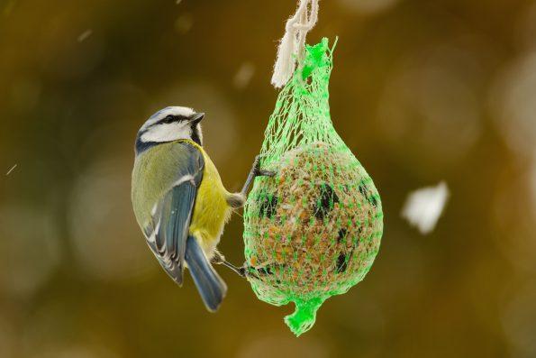comment nourrir les oiseaux en hiver hortus focus i mag. Black Bedroom Furniture Sets. Home Design Ideas