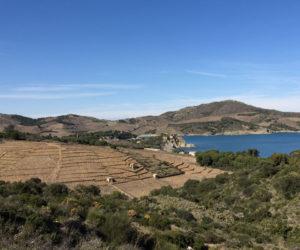 vue des vignes en hiver, à Banyuls