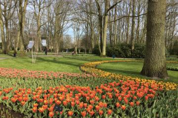 Tulipes : keukenhof