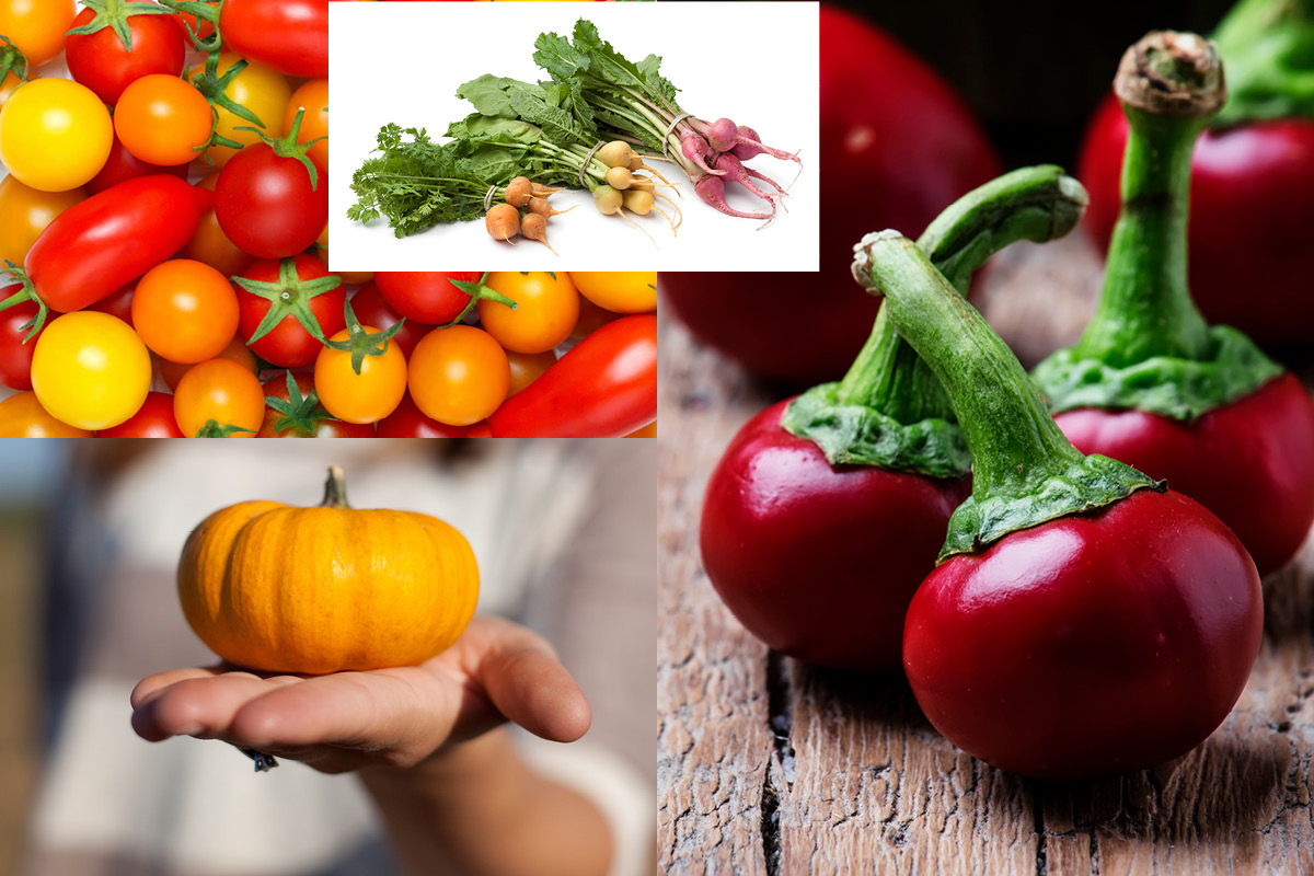 Un Petit Potager Productif mini légumes pour petit potager - hortus focus i mag