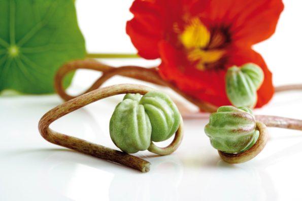 plante aromatique : capucine - Hortus Focus