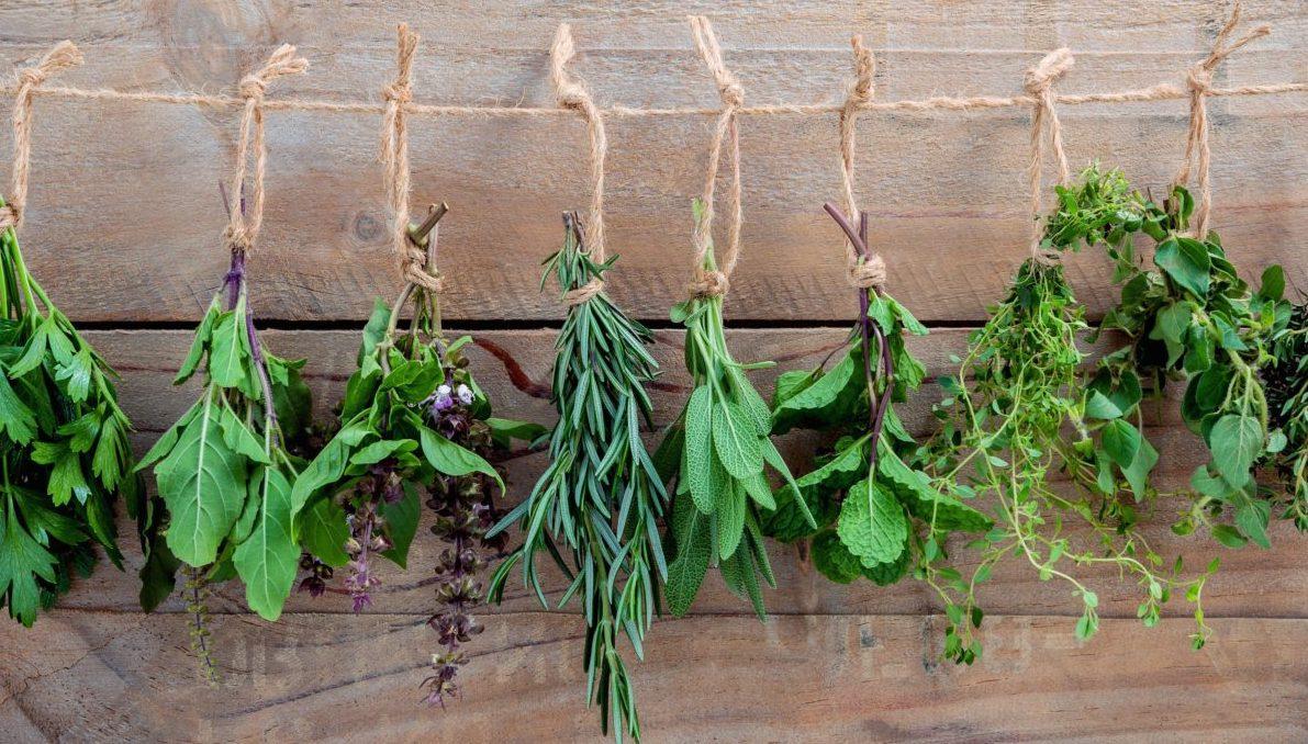 Comment Tailler Le Laurier Sauce comment conserver les herbes aromatiques - hortus focus i mag