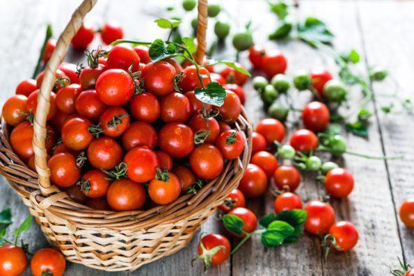tomate cerise - Hortus Focus