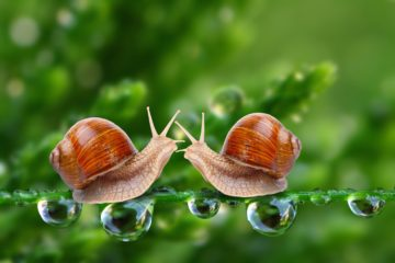 bêtes de sexe : les escargots