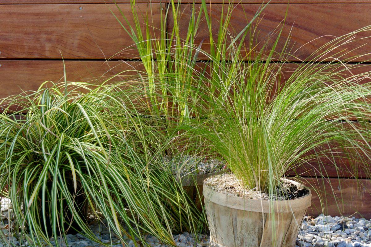 Quelle Plante En Pot Pour Terrasse 3 graminées à cultiver en pot - hortus focus i mag