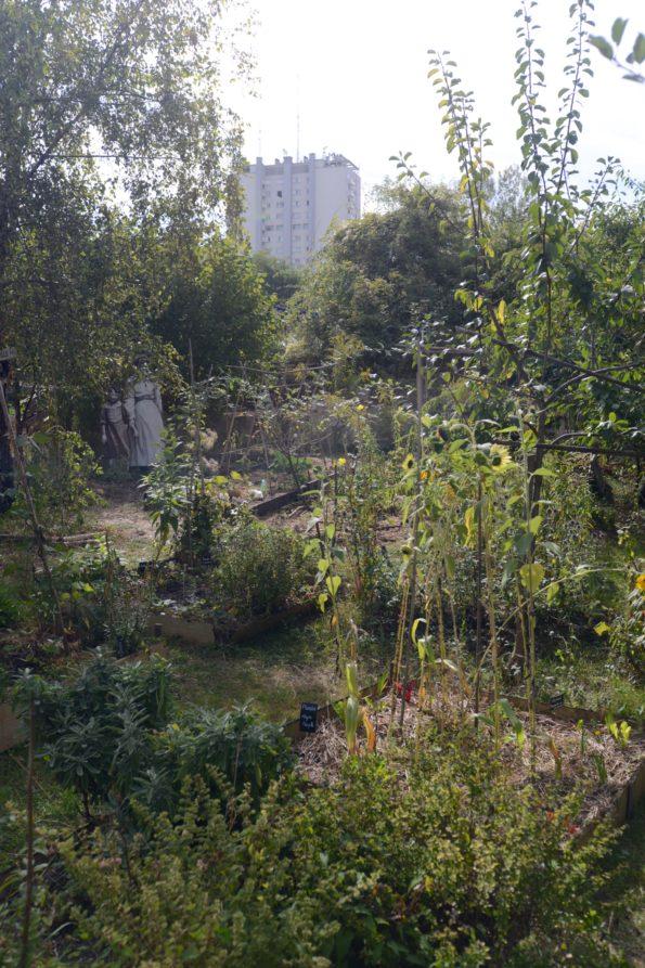 Challenge écologique : Jardins permacoles dans les anciens murs à pêche à Montreuil